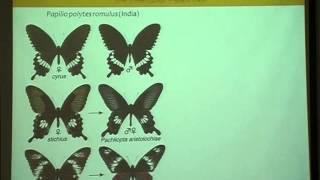Krishnamegh Kunte - Molecular and population genetics of butterfly wing patterning
