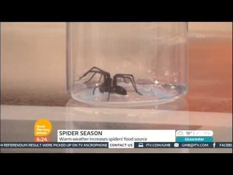 Spider Season - Susanna Reid - ITV - G.M.B. - 25/9/2014 - 6.21am