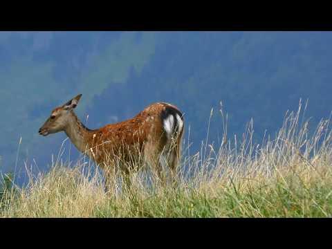 Sur les montagnes de Haute Savoie