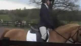 13 Yrs 15.3 Hh Chestnut Warmblood - Hertfordshire