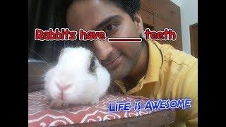 Rabbits Teeth Information - English & Hindi