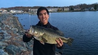 PERSONAL BEST BASS!!! 20 LB Limit Caught from the BANK on the Northeast River in MD 11/17/15