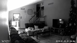 Paranormal Growl Caught on Security Camera 2019