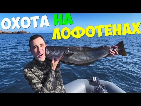 Подводная охота на Лофотенских островах! Набил тачку рыбы.