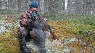 Посмотреть охоту на глухаря осенью глухая тайга
