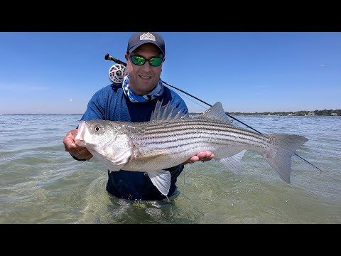 Kayak Sight Fishing For Striped Bass In Shallow Water On The Fly, Moriches NY