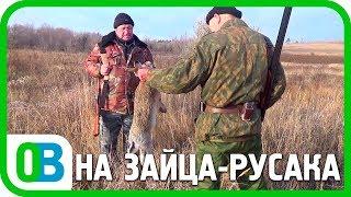 УДАЧНАЯ охота на зайца русака 2018