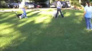 Top Dog Basic Obedience - Level 1 Training