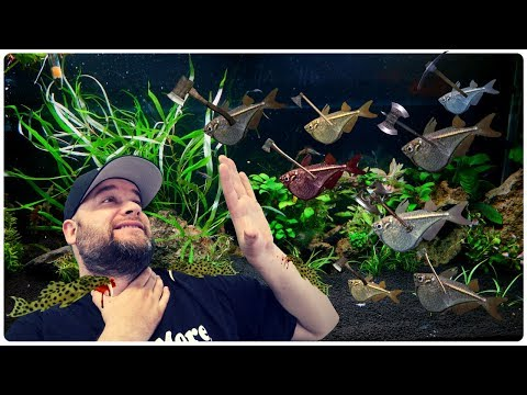 VAMPIRE PLECOS AND HATCHET FISH!!!  With A Plant Unboxing