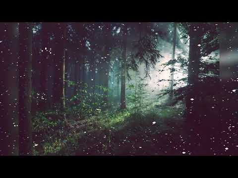 Nature Therapy Relaxing FullMotion Forestry with Natural Sounds