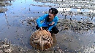 Bắt Cá Lóc trên ruộng cạn nước nhìn thấy mà ham  | Thôn Nữ Miền Tây