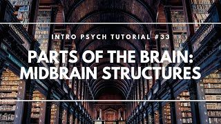 Parts of the Brain: Midbrain Structures (Intro Psych Tutorial #33)