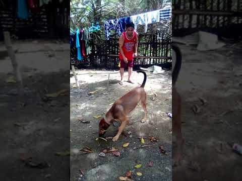 dog-training-agility