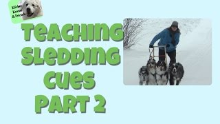Teaching Your Dog Sledding Cues Part 2