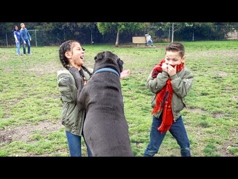 Txunamy gets HURT by a huge dog while looking for her puppy March Pom | Familia Diamond