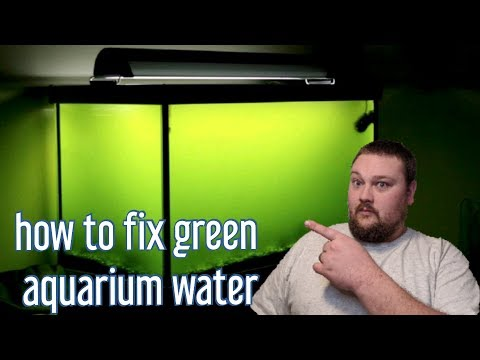 Green Water - How To Fix It!