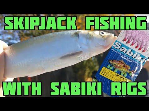 Skipjack Fishing - How To Catch Skipjack Herring With Sabiki Rig - Catch N Freeze Best Catfish Bait