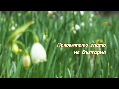 Лековитото злато на България/ The Medicinal Gold of Bulgaria