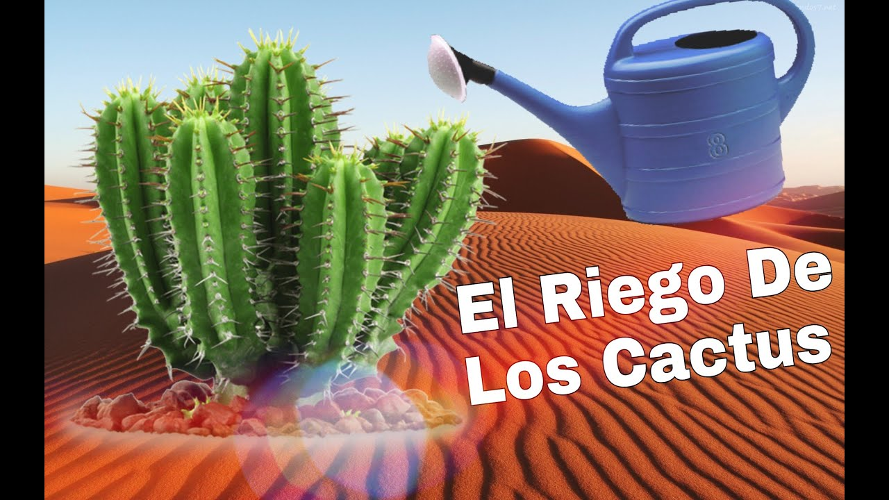 riego cactus
