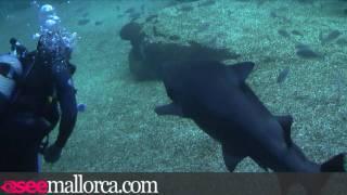 Swimming with Sharks at Palma Aquarium Mallorca