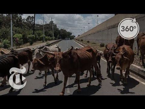 The Urban Shepherds of Nairobi | The Daily 360 | The New York Times