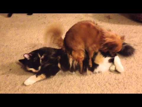DOG HUMPS CATS to techno music