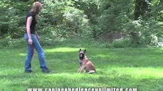 Maryland Dog Training   Fourth Session