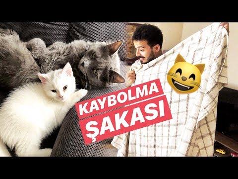 KEDİLERİME KAYBOLMA ŞAKASI YAPTIM!