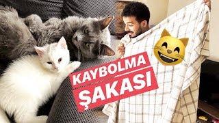 KEDİLERİME KAYBOLMA ŞAKASI YAPTIM! Video