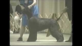 2001 Ahca National Specialty (2/5) - Dog Classes