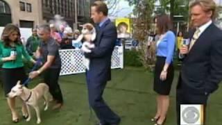 Cesar Fever: The Dog Whisperer