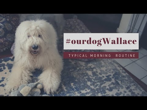 Old English Sheepdog's Morning RoutineGRWMEd&Mel
