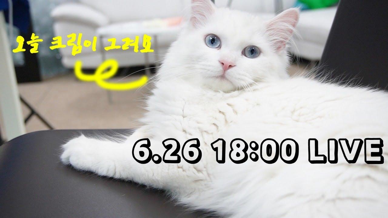 고양이 그려주는 라이브 방송 : 크림편 [풀버전]