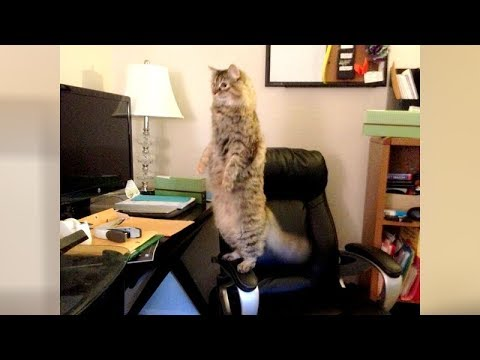 This FUNNY ANIMAL COMPILATION is a LAUGH BOMB!