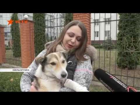 Чиновник із Хмельницького волочив за машиною скривавленого домашнього собаку