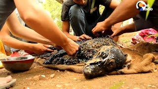 Dog Rescue After Dog Falls in Tar | The Dodo