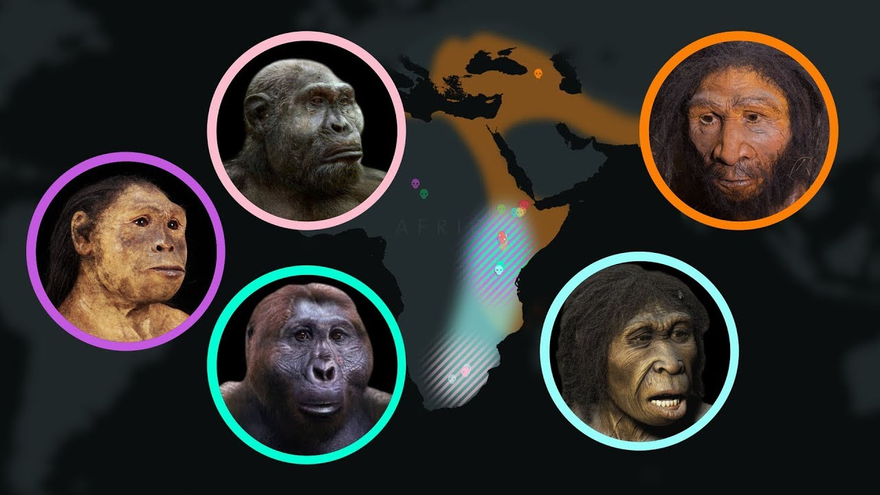 How Humans Have Evolved over the Last 7 Million Years