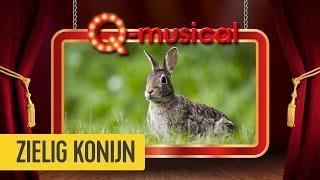 zielig konijn de q musical mattie wietze