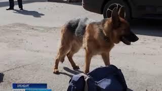 В кинологической службе Оренбургской таможни работают собаки с уникальным нюхом