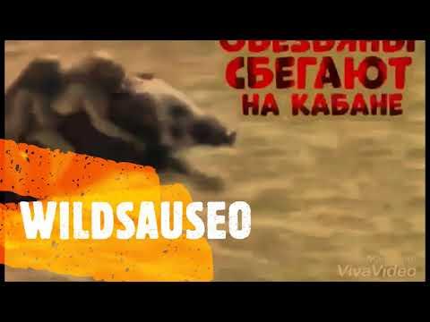 WildsauSEO - Der geilste SEO der Welt!