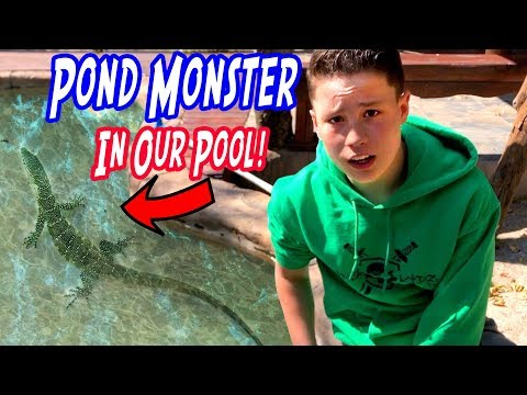 I found a pond monster in my pool!