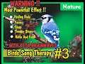 Nature BirdsSong Therapy With 15 Hz BETA BRAINWAVES !! #3