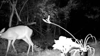 Deer Defeat the best natural deer, rabbit and groundhog repellent that never sleeps.