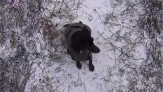 Zimowy spacer | zabawa w chowanego z psem | Operacja wyciągania kolca ;)