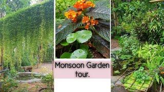 മഴയും എന്റെ പൂന്തോട്ടവും🌸 Monsoon Garden tour and some tips to care plants in Monsoon