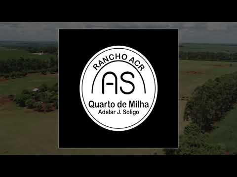 LOTE 18 - ESTRELLA SHINERS AJS - 1° LEILÃO SELO DE RAÇA