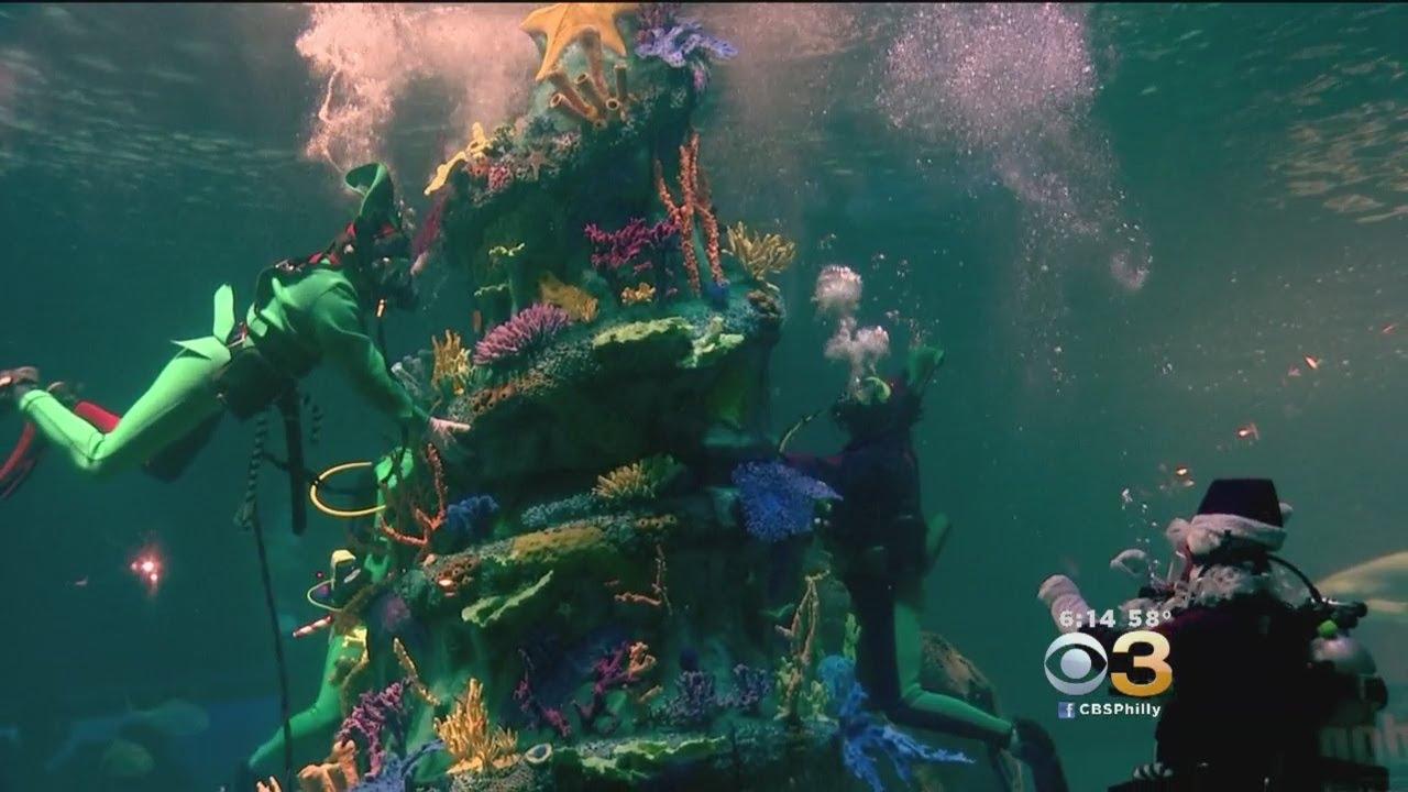 Adventure Aquarium Celebrates Christmas