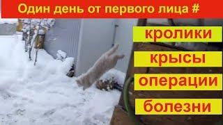 Один день от первого лица # кролики, крысы, операции, болезни