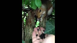 Man gets unexpected gift after feeding a squirrel