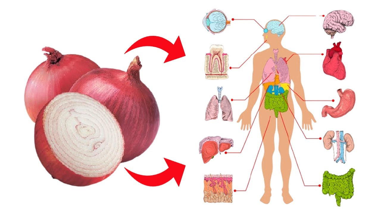 Top 6 Health Benefits Of Onions || Benefits Of Eating Raw Onions Everyday